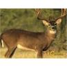 Caldwell Natural Series Deer Target 234412