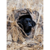 Final Approach Mutt Hut II Dog Blind,31x21x2.5in